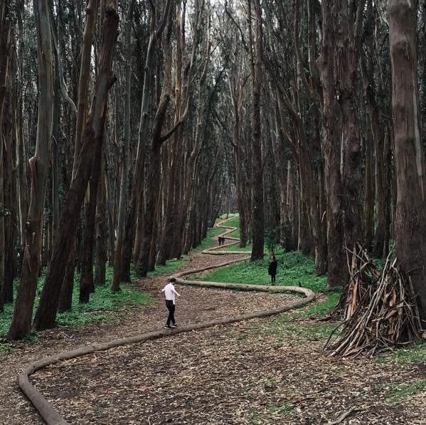 гарне фото у лісі