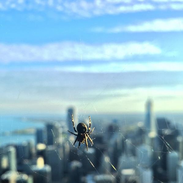 детальне фото павука