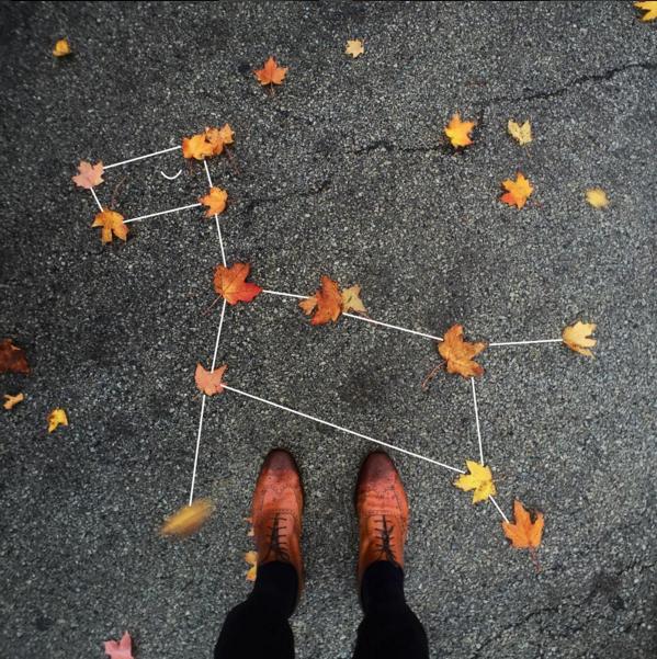 leaf-dog-constellation
