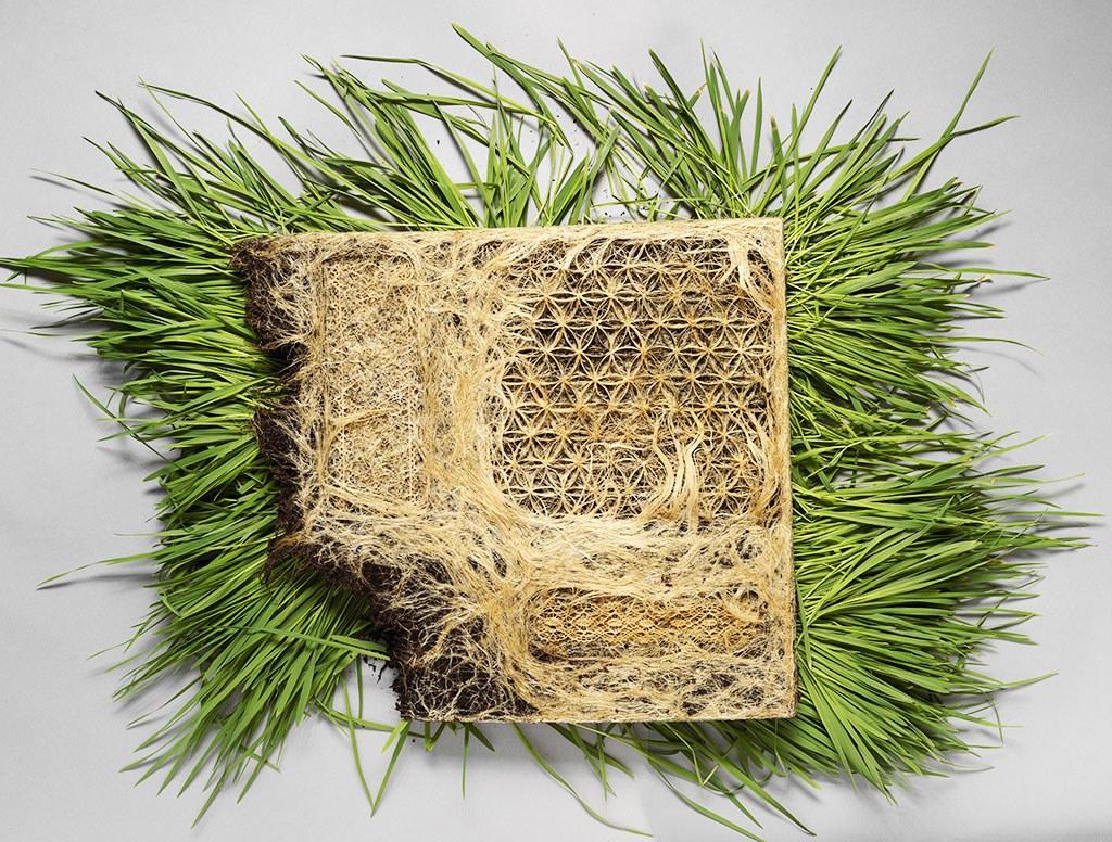 Коріння рослин може бути матеріалом чудових дизайнів
