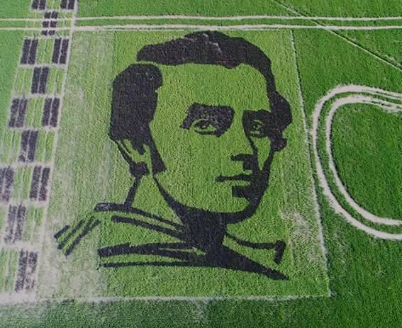 Портрет Шевченка у рисовому дизайні