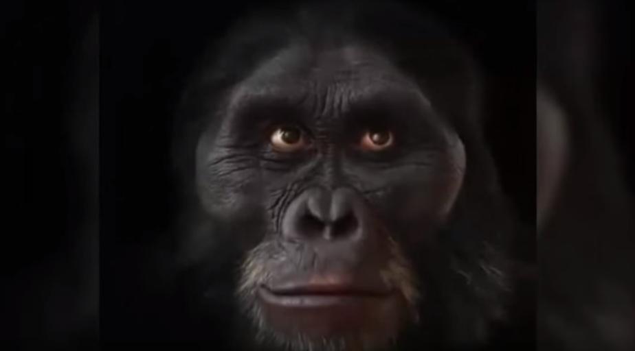 Еволюція людського обличчя за 6 млн. років (Анімація)