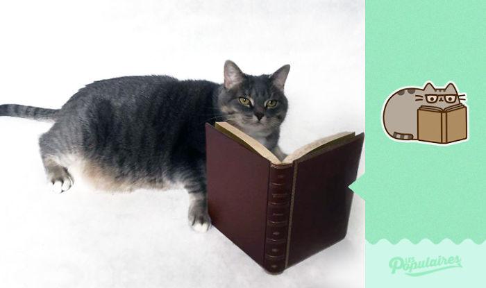 Як створити стікери із котиком для Facebook, самостійно? (Фото)