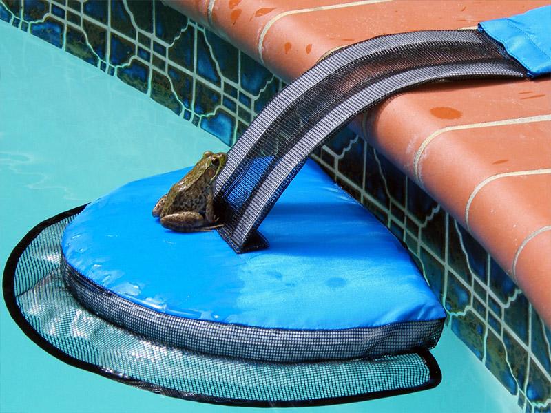 Девайс-пандус, який вбереже ваш басейн від жаб та інших тварин (Відео)
