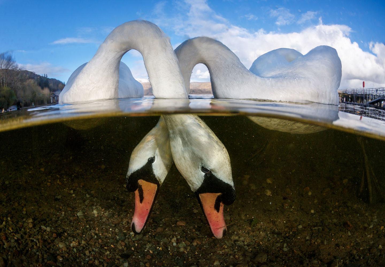 Найкращі фото з конкурсу Underwater Photographer of the Year 2018 – вони дивовижні!