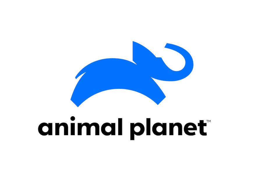 Нова айдентика Animal Planet: ДУЖЕ діджиталізований слон