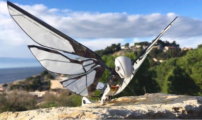 Фантастика: робот літає точно як метелик (ВІДЕО)