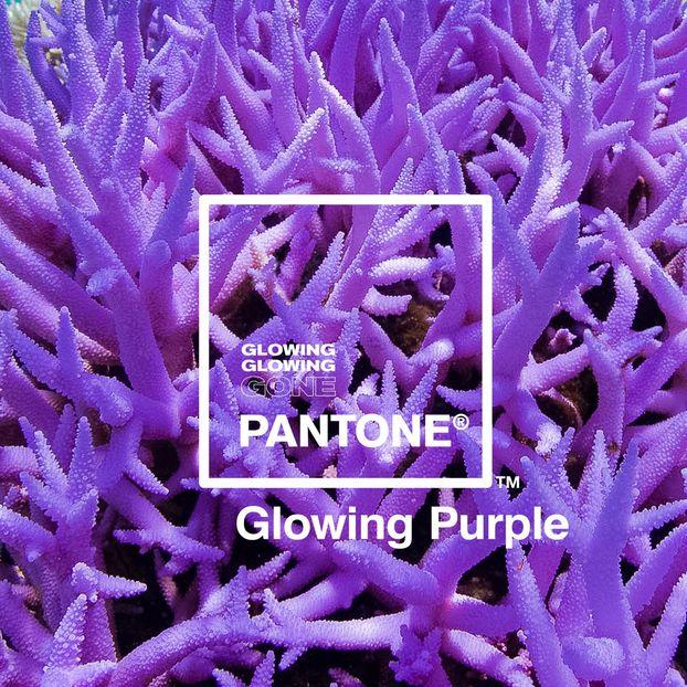 Яскрава кампанія для порятунку коралових рифів – від Adobe і Pantone (ФОТО)